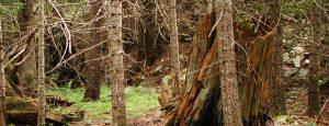 woods 01 slider